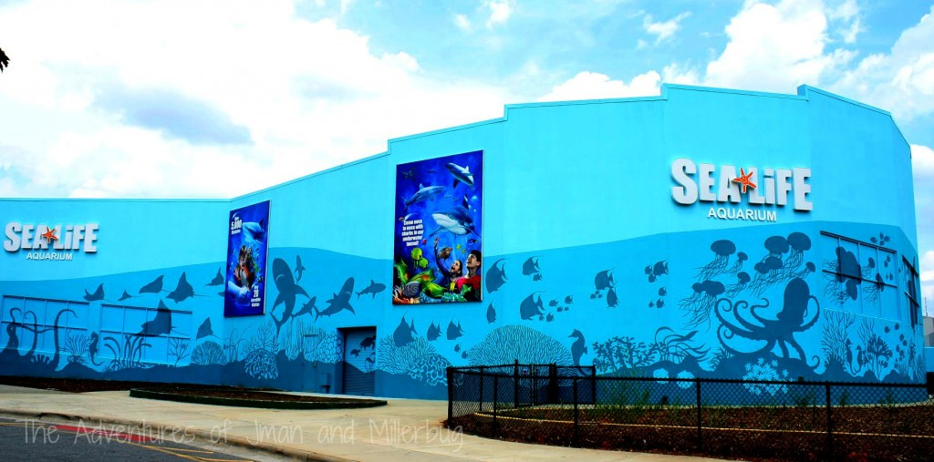 Go On An Undersea Adventure At Sea Life Charlotte Concord