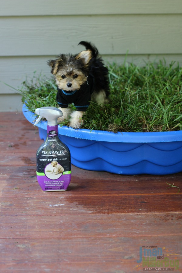 Tips For House Breaking Your New Puppy And A Diy Puppy